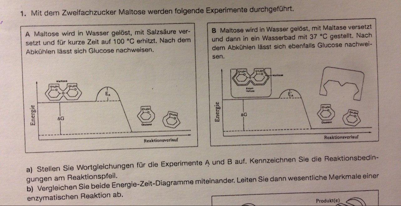 biologen ich bin vollkommen verwirrt schule chemie biologie. Black Bedroom Furniture Sets. Home Design Ideas