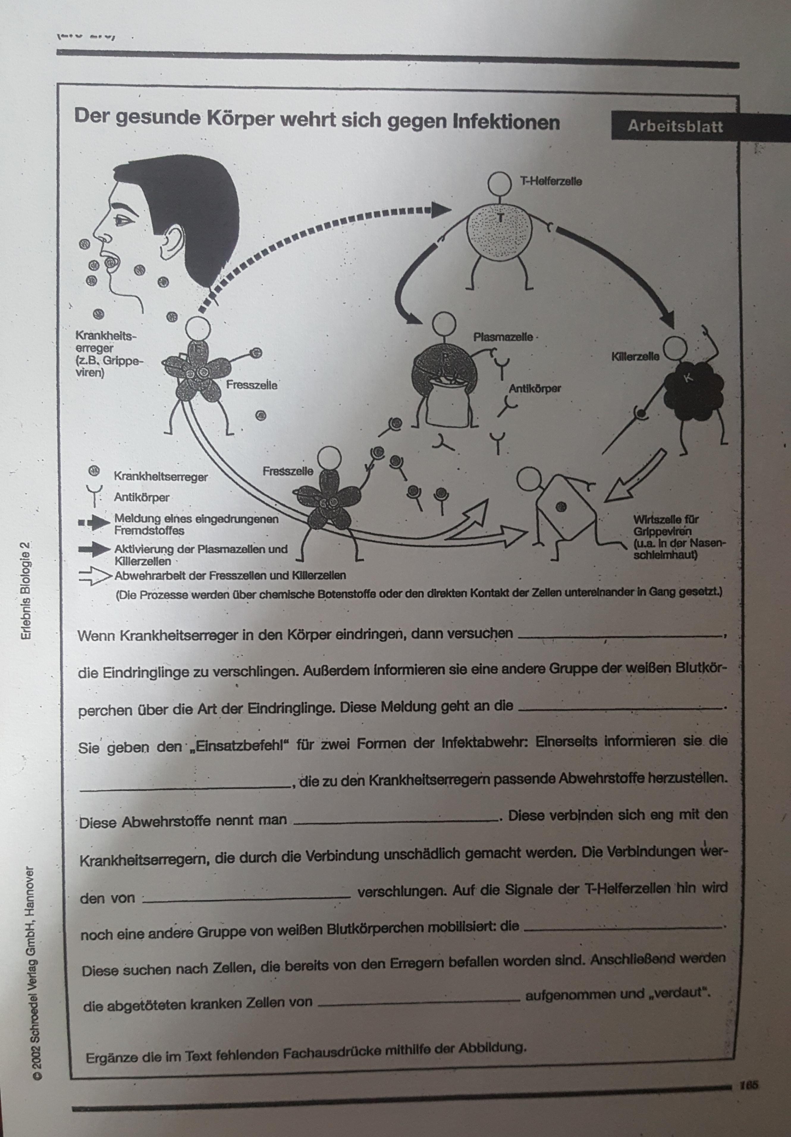 Biologie 10.Klasse) Was kommt in die Lücken? (Schule, Infektion, 10 ...