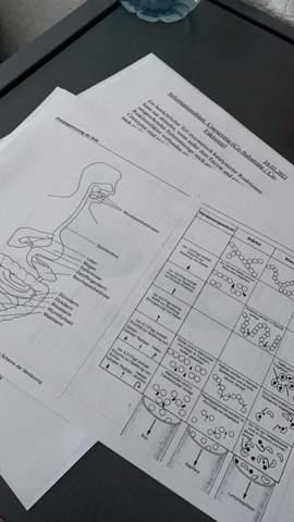 Biologie?