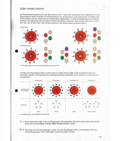 Biologie-Blutgruppen?