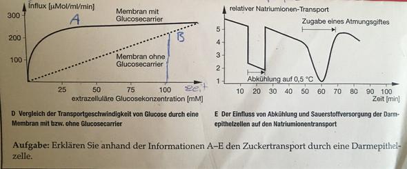 Biologie/ Diagramm beschreiben /Glucose? (Schule, lernen, Klausur)