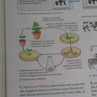 biologie klonen von pflanzen. Black Bedroom Furniture Sets. Home Design Ideas