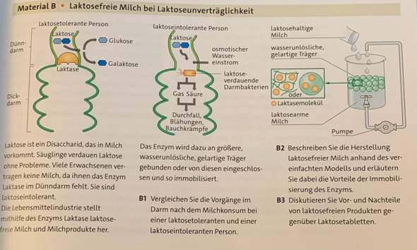 Biologie Laktose?