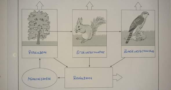 Biologie Ökosystem?