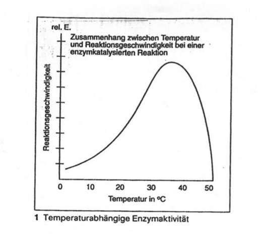 Biologie Temperaturabhängige Enzymaktivität?