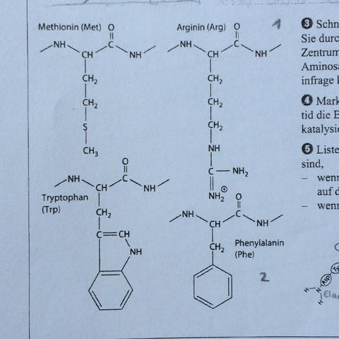 Enzym 3 - (Schule, Chemie, Biologie)