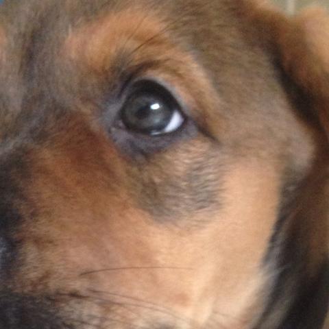 ..... - (Hund, Tierarzt, Welpen)