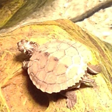 Das ist meine Schildkröte  - (Tiere, Haustiere, Futter)