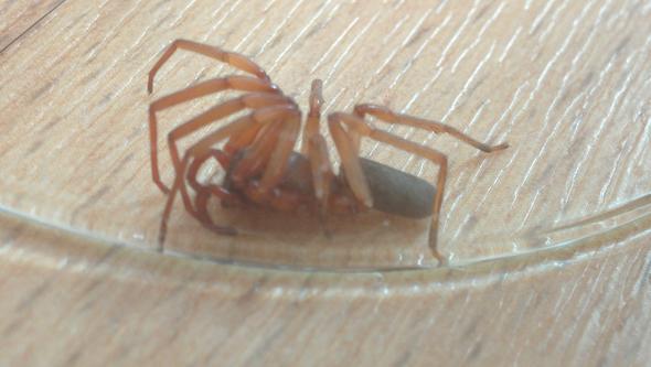 Spinne1 - (Spinnen, Spinne, gliederfüßer)