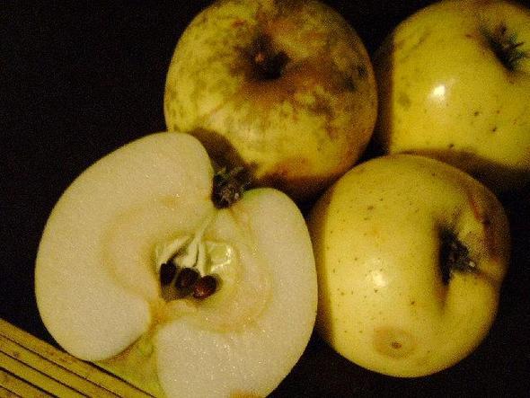 Bitteräpfel3 - (Garten, Apfel, Obstbaum)