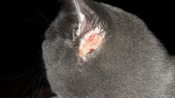 Bild 1 - (Tierarzt, bkh-katze)
