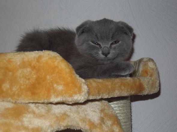 Mein Kater - (Tiere, Katzen, Kater)