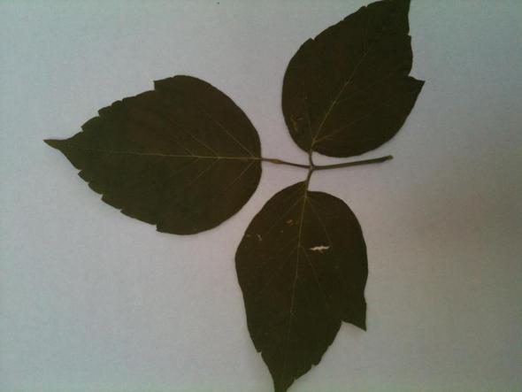 Das Blatt... - (Natur, Baum, Wald)