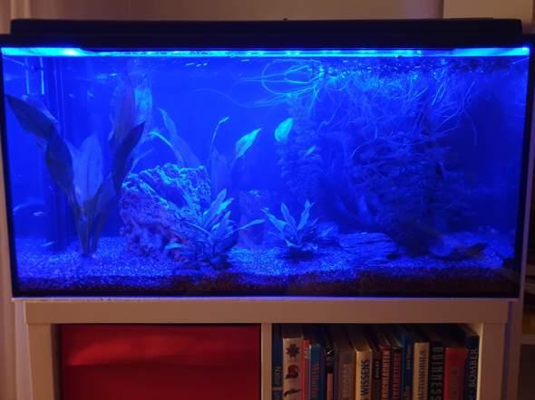 Blaulicht Aquarium?