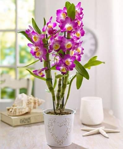 Blüht die Orchidee durchs Umtopfen viel besser?