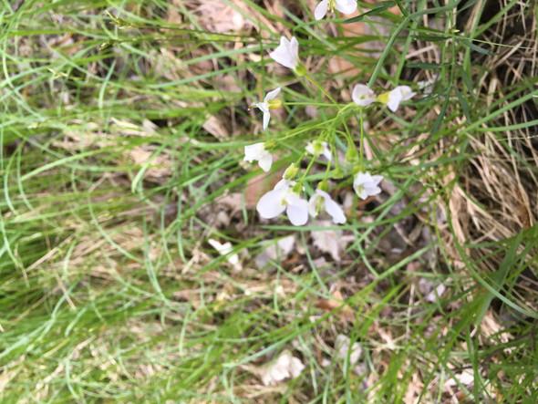 - (Pflanzen, Blumen, Frühling)