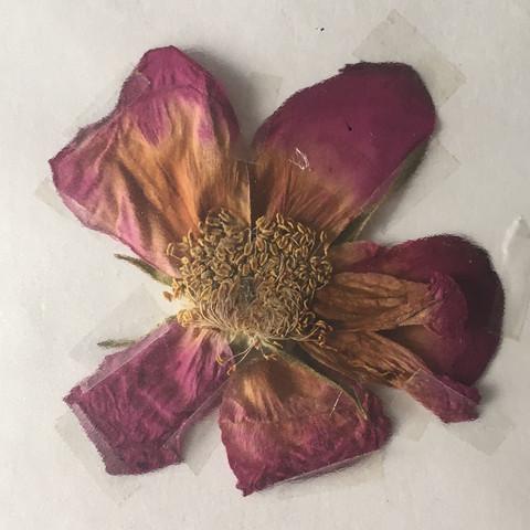 Blume bestimmen (Garten, blumennamen)