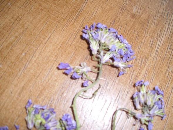 ?? - (Wissen, Pflanzen, Blumen)