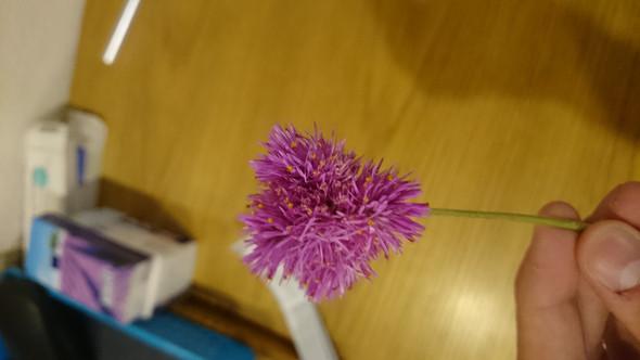 Blume - (Blumen, pink)