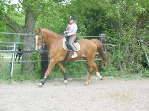 Ich und For Fun - (Pferde, Vertrauen, Natural Horse Manyship)