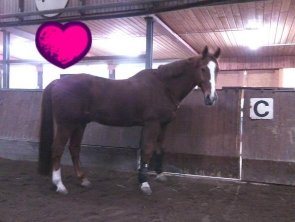 Er - (Pferde, Vertrauen, Natural Horse Manyship)