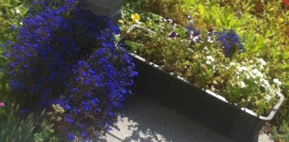 blumen - (Blumen, Pflanzenpflege)