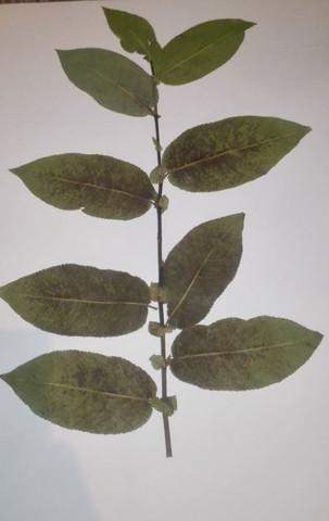 Unbekannte Pflanze 1 - (Schule, Pflanzen, Natur)