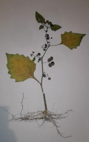 Unbekannte Pflanze 2 - (Schule, Pflanzen, Natur)