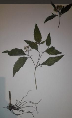 Unbekannte Pflanze 3 - (Schule, Pflanzen, Natur)