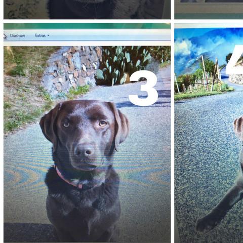 Drei xana - (Liebe, Freunde, Hund)