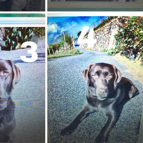 Vier xana - (Liebe, Freunde, Hund)