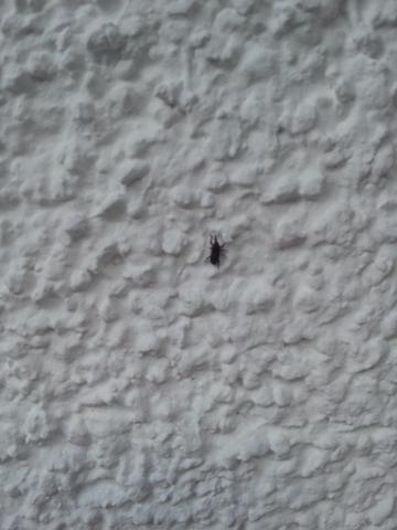 Bild - (Insekten, Ungeziefer)