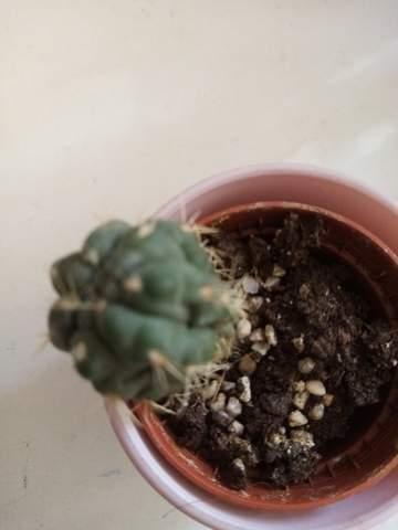 Braucht mein Kaktus Spezielerde?