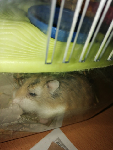 - (Gesundheit, Gesundheit und Medizin, Hamster)
