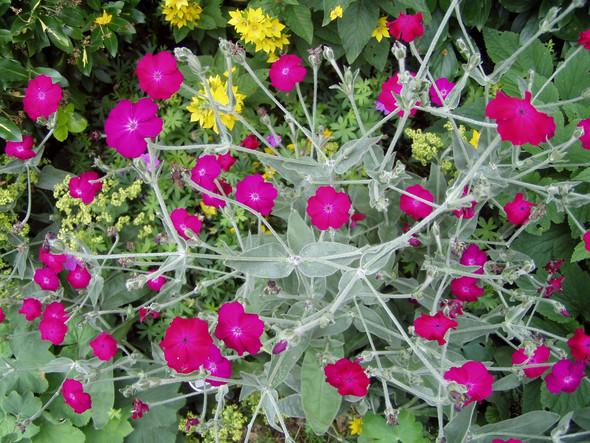 wie heißt diese Pflanze? - (Garten, Pflanzen)