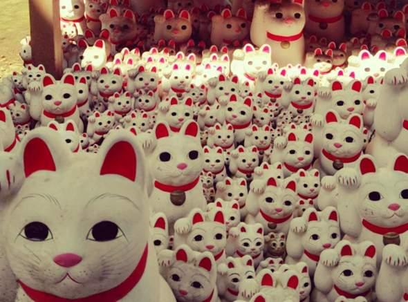 Bringen Lucky Kitten wirklich Glück?