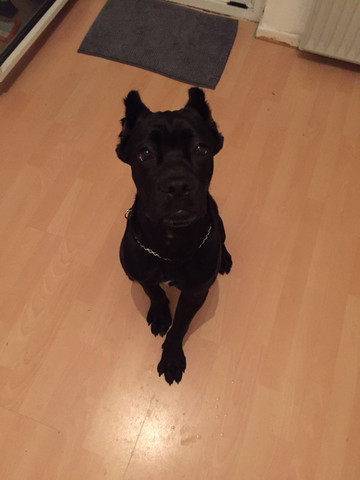 Babyface :-D - (Hund, Verhalten, Junghund)