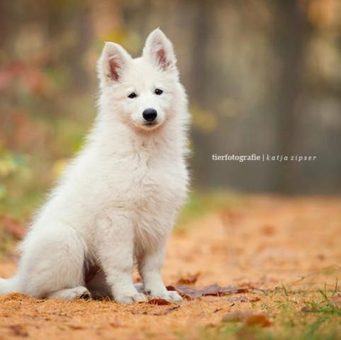 Quelle: Google / Hundefotografie  - (Foto, Hobby, Canon)