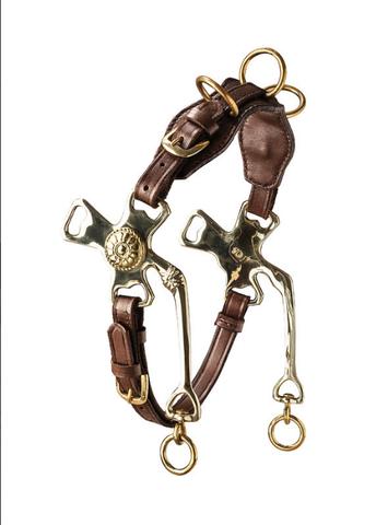 Cavemore - (Ausbildung, Pferde, reiten)