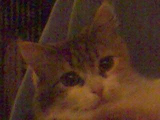 - (Katzen, Heilung, katzenschnupfen)