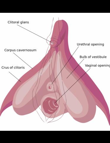 Concorde & Weibliche Anatomie? (Körper, Frauen, Flugzeug)