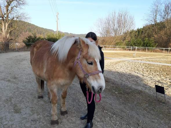 - (Gesundheit und Medizin, Pferde, Pferd)
