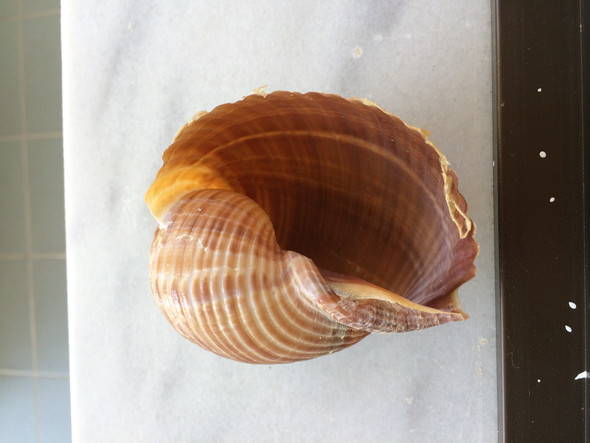 Muschel1 - (Urlaub, Kreta)