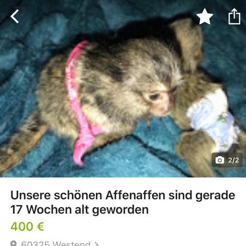 Darf man in Deutschland Affen verkaufen (Ebay Kleinanzeigen ...