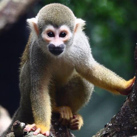 Darf Man Kleine Affen Zu Hause Halten Haustiere