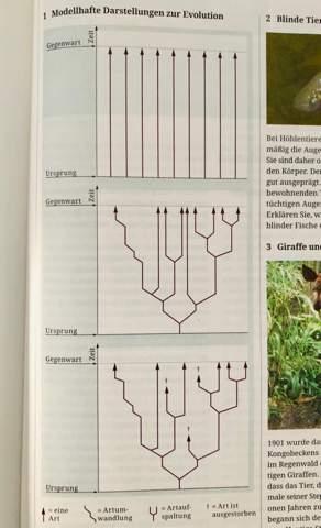 Darstellungen zur Evolution- Vergleich?