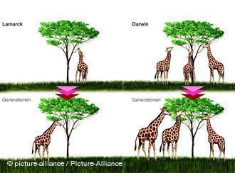 ich hoffe ihr könnt damit was anfangen (: - (Freizeit, Giraffe, Darwin und Lamarck)