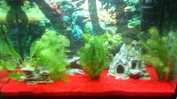 aq - (Aquarium, Aquaristik)