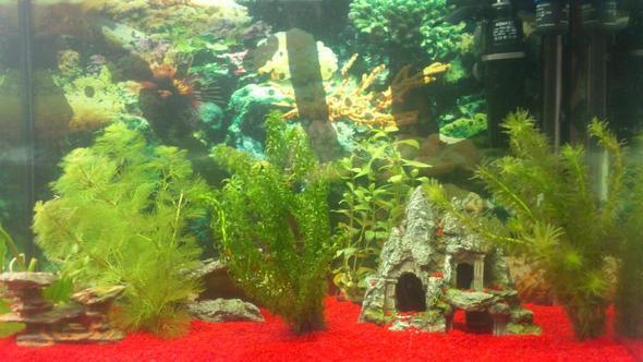 aq2 - (Aquarium, Aquaristik)