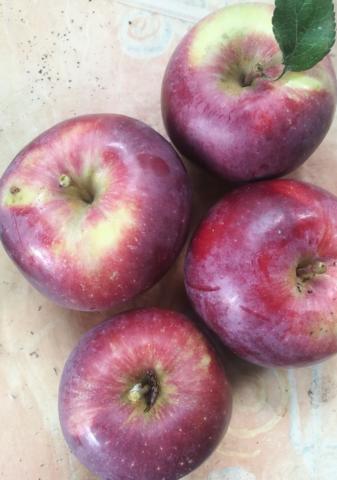 Die Äpfel - (essen, Garten, Obst)